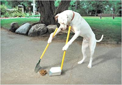dog-cleaning-poop